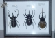 wonderful-insects_chemnitz_2004-19