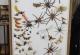wonderful-insects_dessau_2003-10