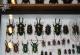 wonderful-insects_frankfurt09-110
