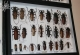wonderful-insects_frankfurt09-112