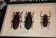 wonderful-insects_frankfurt09-114