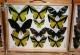 wonderful-insects_frankfurt09-118