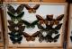 wonderful-insects_frankfurt09-123