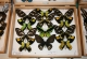 wonderful-insects_frankfurt09-124