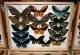 wonderful-insects_frankfurt09-125