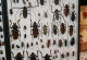 wonderful-insects_frankfurt09-16