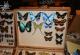 wonderful-insects_frankfurt09-29