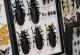 wonderful-insects_frankfurt09-47