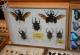wonderful-insects_frankfurt09-6