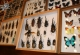 wonderful-insects_frankfurt09-7