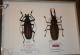 wonderful-insects_frankfurt09-70