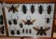 wonderful-insects_frankfurt09-71