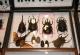wonderful-insects_frankfurt09-74