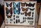wonderful-insects_frankfurt09-85