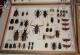 wonderful-insects_frankfurt09-86