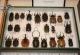 wonderful-insects_frankfurt_10-16