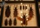 wonderful-insects_frankfurt_10-23
