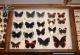 wonderful-insects_frankfurt_10-44
