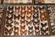 wonderful-insects_frankfurt_10-49