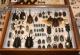 wonderful-insects_frankfurt_10-53