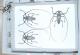 wonderful-insects_leipzig_2004-12