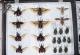 wonderful-insects_leipzig_2004-16