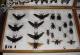 wonderful-insects_leipzig_2004-24