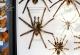 wonderful-insects_leipzig_2007-34