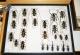 wonderful-insects_leipzig_2007-38