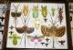 wonderful-insects_leipzig_2007-4