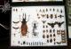 wonderful-insects_leipzig_2007-54