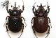 wonderful-insects_leipzig_2007-64