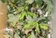 wonderful-insects_lichtenstein09-20