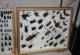 wonderful-insects_lichtenstein09-30
