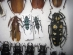 wonderful-insects_moscow_14-32