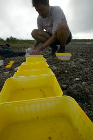 Pan trapping is often used to identify arthropod presence in a given area. Here, pan traps are being used to survey for oceanic island arthropod biodiversity