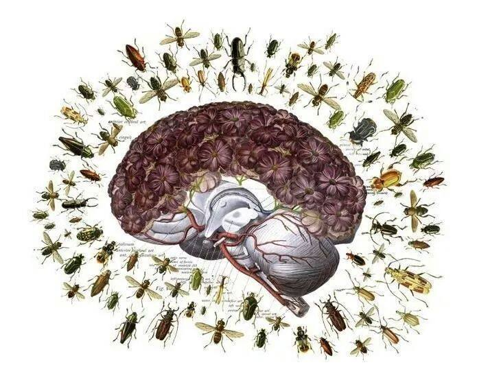 ... Insect-Brain ...
