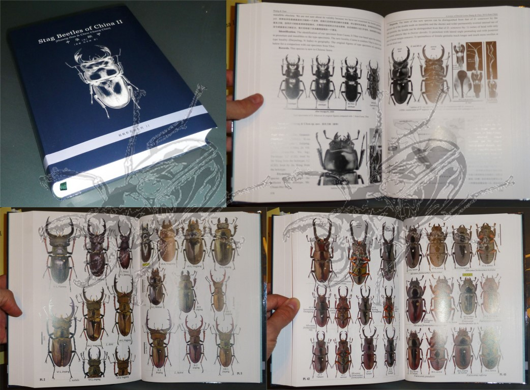 Stag Beetles of China Vol. II