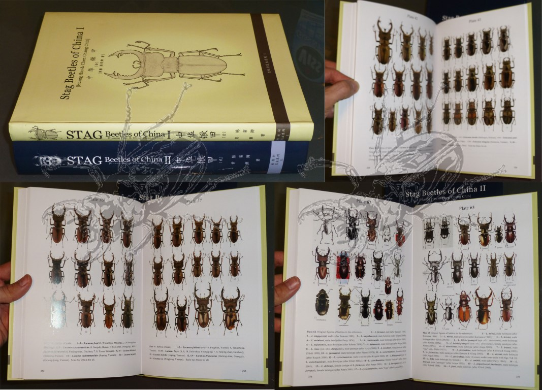 Stag Beetles of China I - view into the book...
